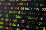 Elévation chronique de la créatine-phospho-kinase : l'approche NGS s'avère performante et utile