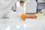 Dystrophie musculaire de Becker et approche pharmacologique conventionnelle : les effets de la L-citrulline et de la metformine ne se potentialisent pas