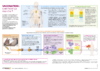 pagescentrales_Reperes_VaccinationMnM_oct20 - application/pdf
